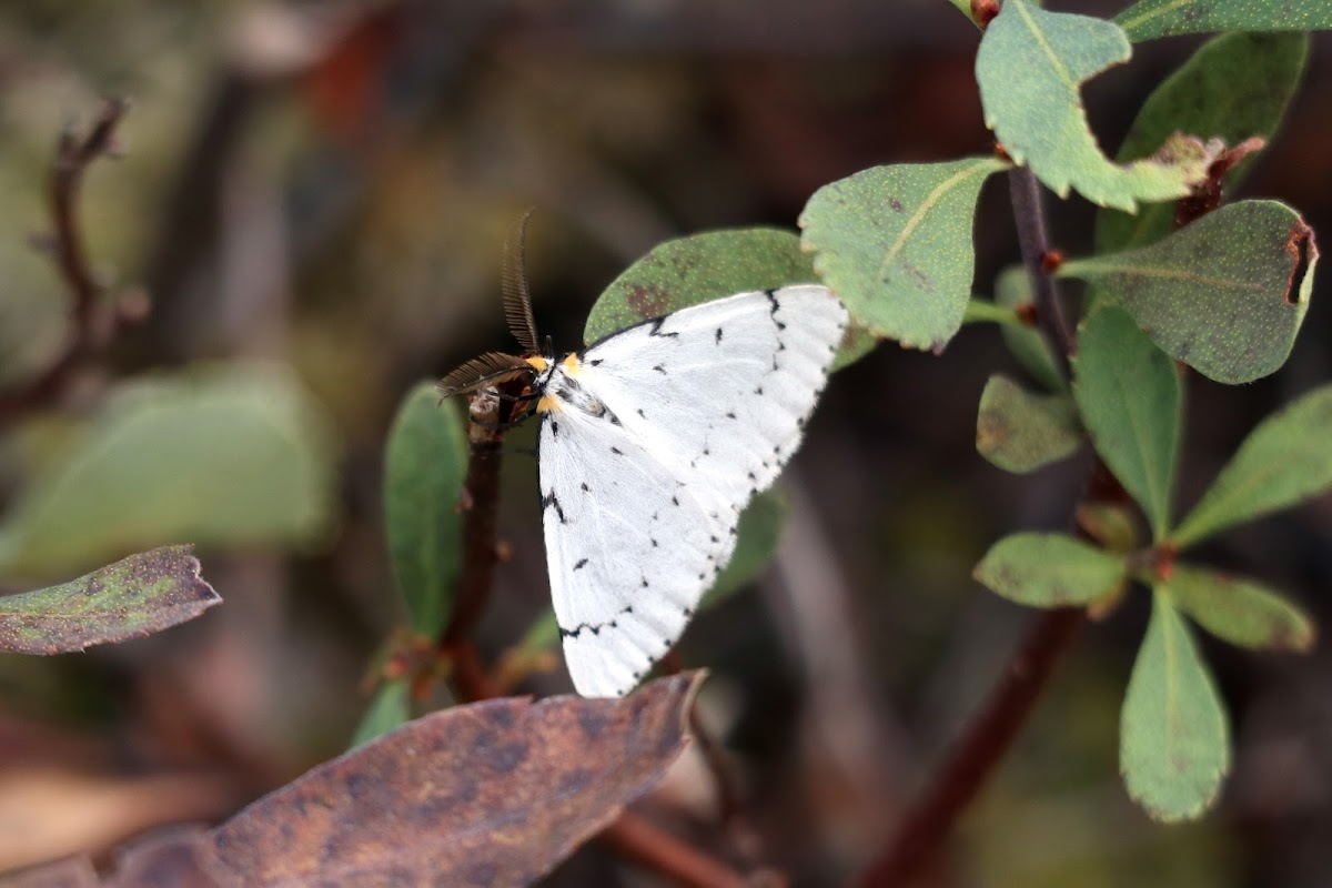 Chain-dotted Geometer