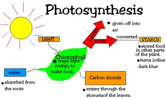 phtosynthesis projects Photosynthesis & cellular respiration plants do photosynthesis, a complicated process, and without plants, we'd all be dead pamela ronald these resources are.