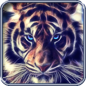 Tiger, live wallpaper