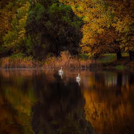 by Jasminka  Tomasevic - Landscapes Weather