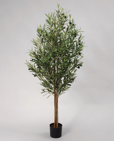 Olive Tree (Olivträd) - 110cm - 200cm