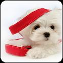 Cute Dog Theme icon