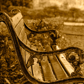 The Old Friend by Chandrasekhar Yanamandra - Artistic Objects Furniture ( furniture, chair, garden, park )