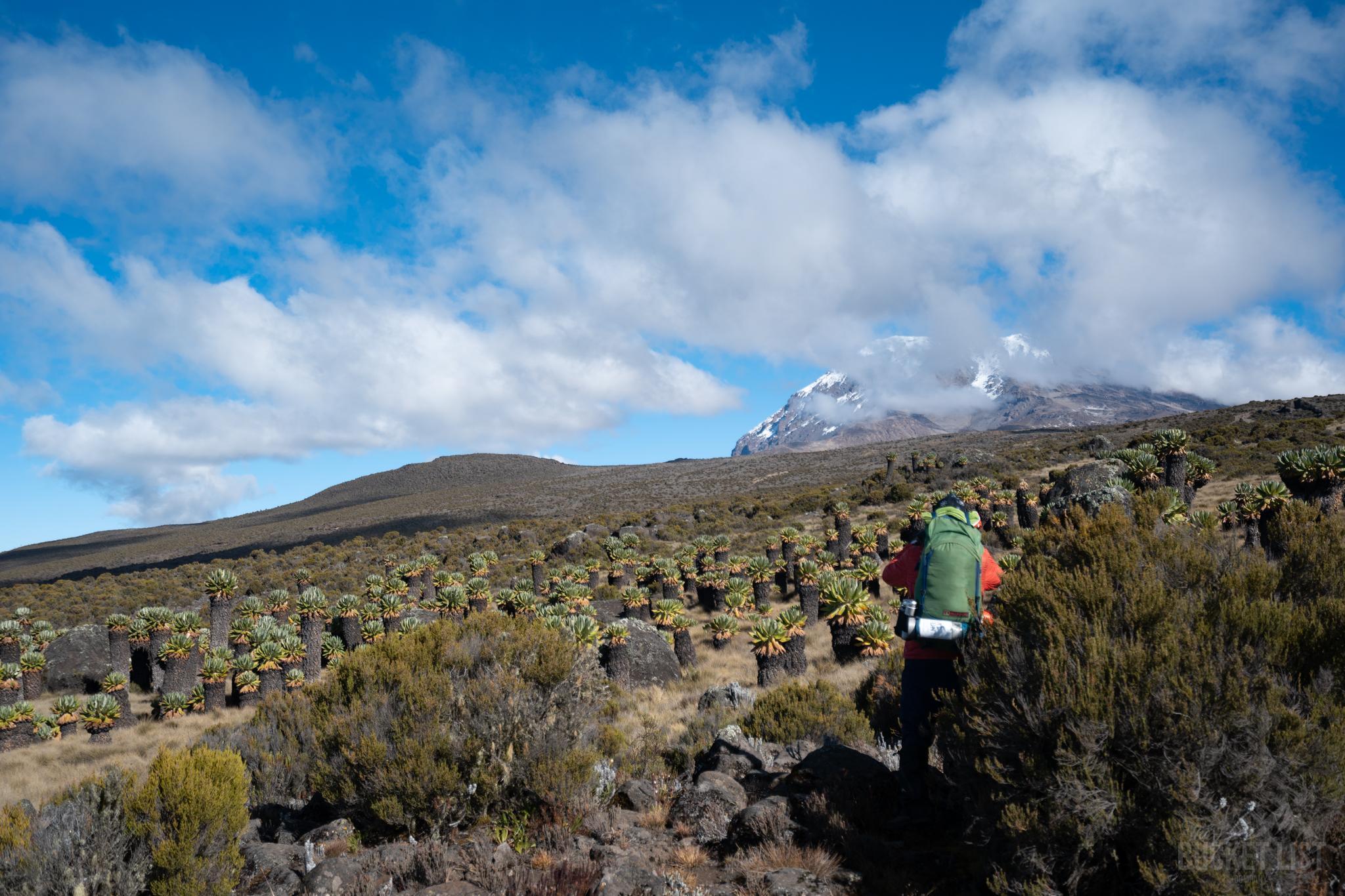 A trekker walking up a mountain