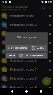 Appp.io - Pelican Bird sounds - náhled