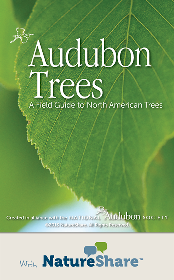 Audubon Trees - screenshot