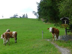 Photo: 37 Kühe zwischen Tradition und Fortschritt