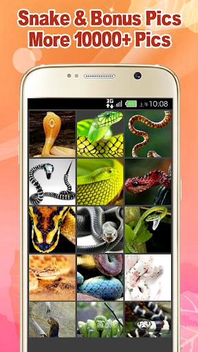 Beautiful Snake Wallpaper