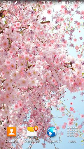 玩免費個人化APP|下載桜ライブ壁紙 app不用錢|硬是要APP