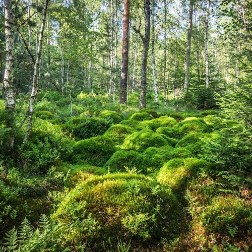Das Würzbacher Moor ist ein Naturschutzgebiet und Bannwald