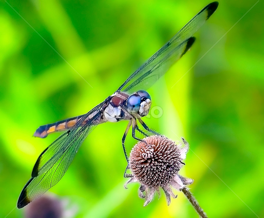 by Cynthia Babcock - Animals Insects & Spiders
