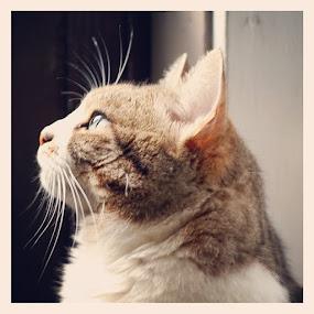 Majestic #kitty by Noah ONeill - Instagram & Mobile Instagram
