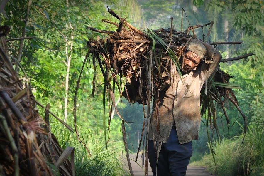 Pengangkut tebu by Achmad Bachtiar - People Street & Candids ( work, living, hard, people, sugarcane, tebu )