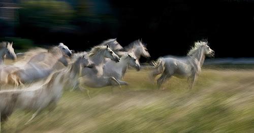 by Milan Malovrh - Digital Art Things ( pwc moving animals )