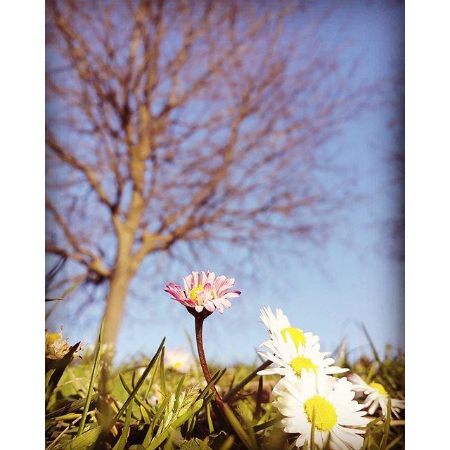 I fiori   di filippoiacob