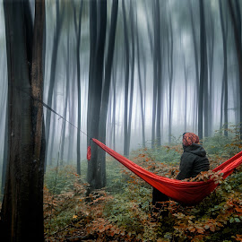 by Victor Hodorog - Digital Art People ( forest, landscape, fog, hammock )