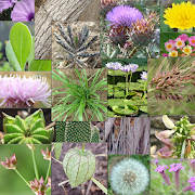 App Icon for Weeds of South East QLD and Northern NSW App in Czech Republic Google Play Store