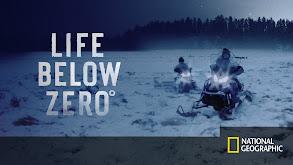 Life Below Zero thumbnail
