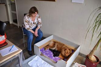 Photo: Birgith Krammer kom og hjalp til, fordi jeg mente Finja ville føde samtidig, men hun stoppede helt, da Kiira startede.