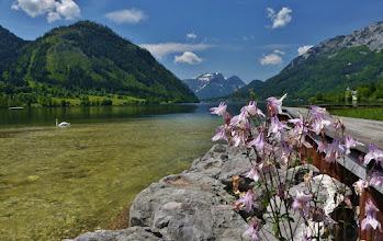 Photo: Akelei am Grundlsee.  Das klare Seewasser, gespeist durch den Fluss Traun,  hat Trinkwasserqualität.