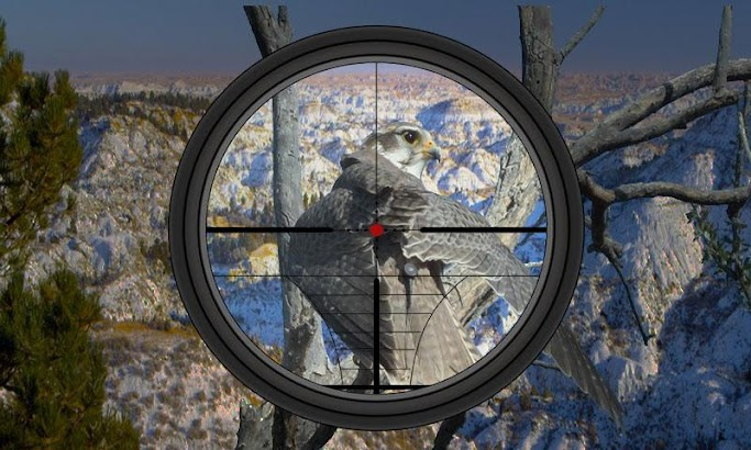 Hunting Birds In Desert screenshot