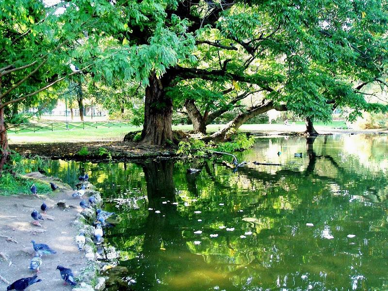 L'albero riflesso di fantasia