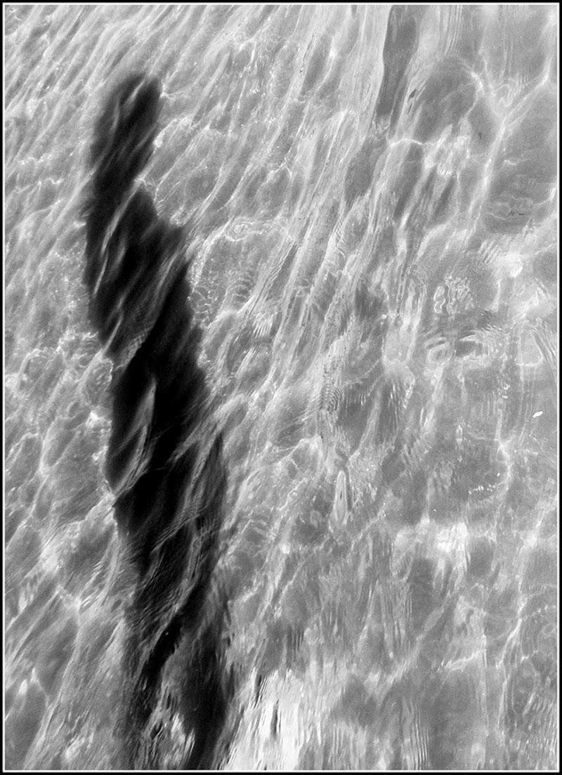 Venere dalle acque di ETTORE STABILINI