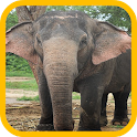 Elephant wallpaper icon