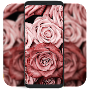 Gold Rose Wallpaper Background Apk Apkpure Ai