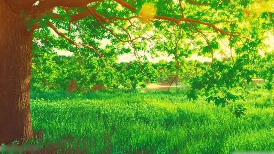 Spring Scenery Wallpaper - náhled