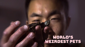 World's Weirdest Pets thumbnail