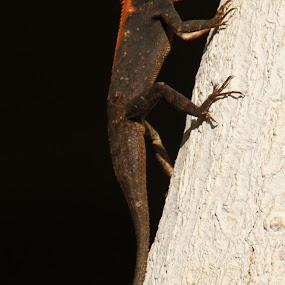 lizard by Vivek Naik - Animals Reptiles (  )
