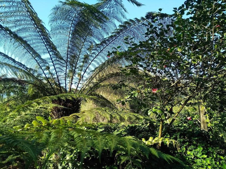 Foto Jardín botánico Fundación Sales 14