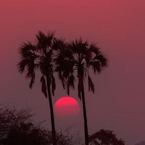 Sunrise by VAM Photography - Landscapes Sunsets & Sunrises ( ruaha national park, travel, sunrise, landscape, tanzania,  )