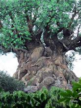 Photo: The Tree of Life at Disney Animal Kingdom