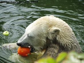 Photo: Da sind ja noch Kuerbis und Apfel ;-)