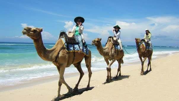 Bali-Camel-Safari