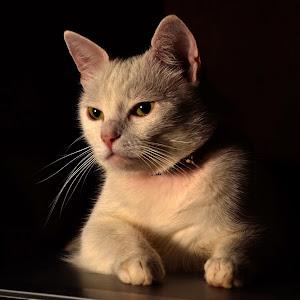 don.gatto.jpg
