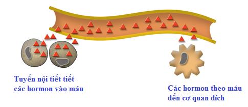 Máu là gì? Tổng quan, thành phần và tính chất của máu trong cơ thể người