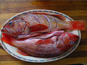 Photo: red snapper Pisces