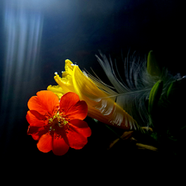 *** by Jurijs Ratanins - Instagram & Mobile Android ( mobilography, nature, plants, feather, flower )