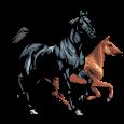 Horse breeds - Photos apk