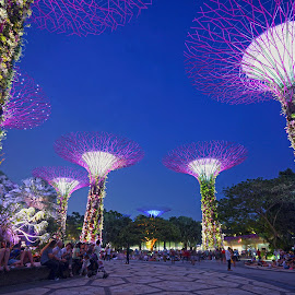 Garden by the Bay by Mulawardi Sutanto - City,  Street & Park  Night ( giant tree, singapore, keren, banget, mantap, night, garden by the bay, travel )