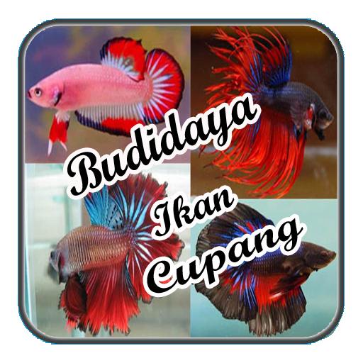 Budidaya Ikan Cupang Terbaru