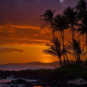 Sunset on Kauai by Dale Fillmore - Landscapes Sunsets & Sunrises ( beach, sunset, shoreline, palms, silouettes, clouds,  )