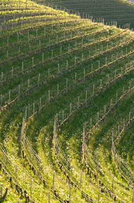 Wineyards di Gabriy90