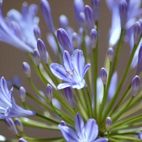 by David Degruchy-Jones - Nature Up Close Flowers - 2011-2013