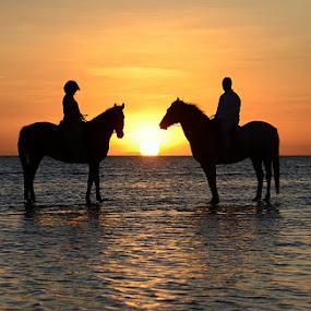 by Andrew Morgan - Animals Horses