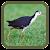เสียงนกกวักต่อ เสียงนกไก่นา file APK Free for PC, smart TV Download