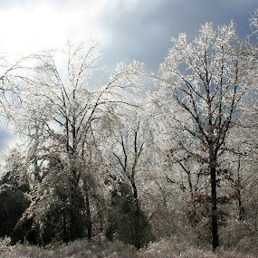 Ice Storm 2009 by Becky Patlan-Garcia - News & Events Weather & Storms ( 2009, ice storm, damage, aftermath, arkansas )